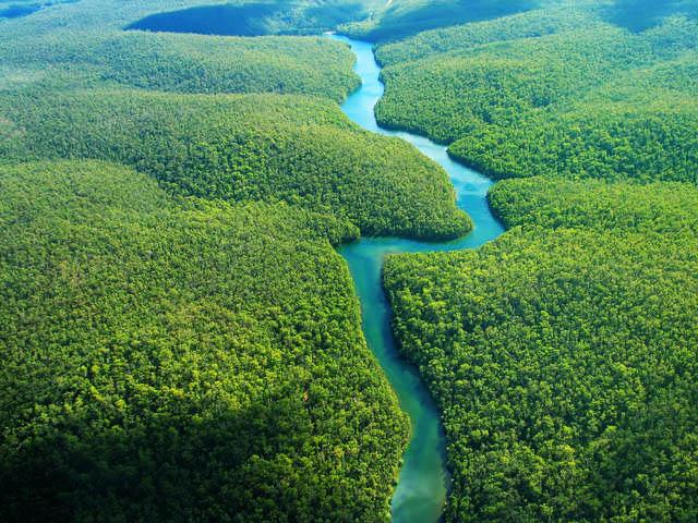 Risultati immagini per foresta amazzonica immagini